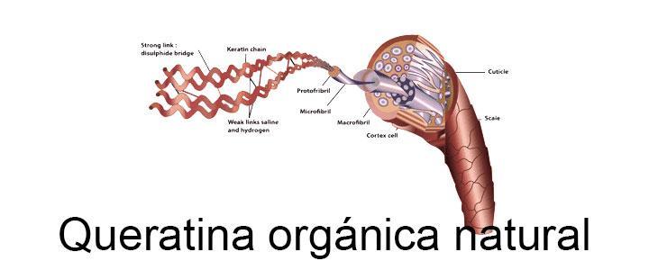 Estructura de la queratina orgánica natural